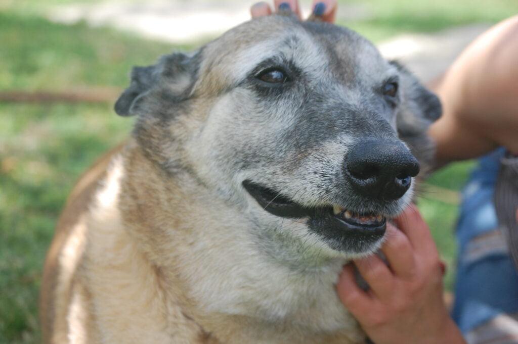 בונגו המתוק, כלב מעורב שמחכה לאימוץ בכלבית נתניה