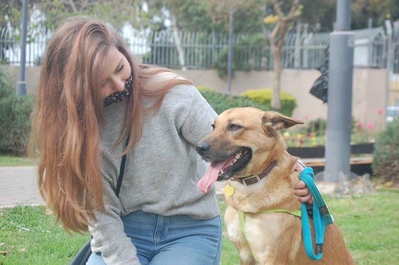 אליס המקסימה, כלבה מעורבת לאימוץ מכלבית נתניה
