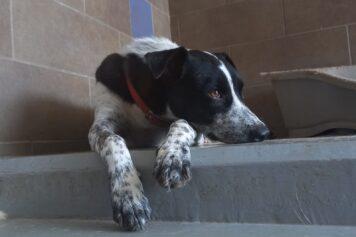 מיקי המדהים, כלב מעורב שמחכה לאימוץ בכלביית נתניה